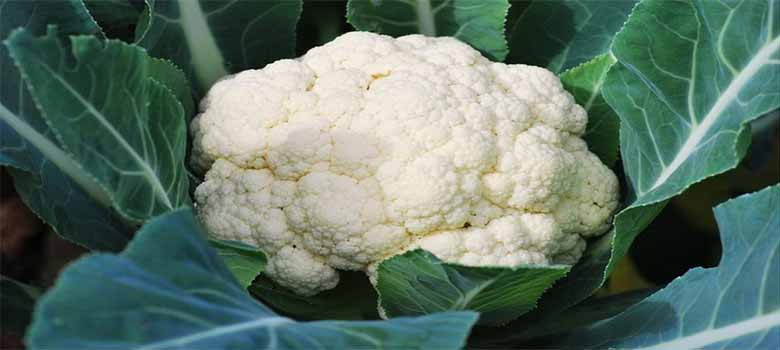 Cauliflower - High In Vitamin C
