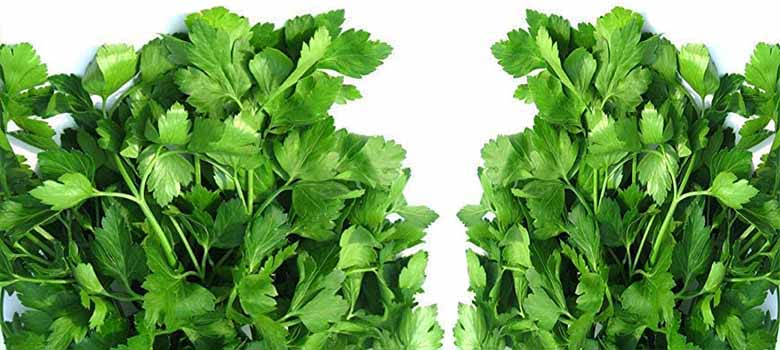 Parsley Herb High In Vitamin C